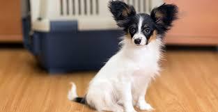 pet safe flooring