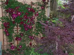 10 Fast Growing Flowering Vines  Best Wall Climbing Vines To PlantClimbing Plant For Shade