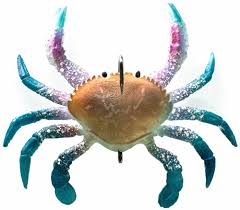 Crab Size Chart Nj Chasebaits Smash Crab 3 93 In Blue Swimmer