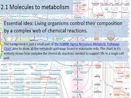 Iubmb Nicholson Metabolic Pathways Chart By Chris Paine Molecules To Metabolism Essential Idea