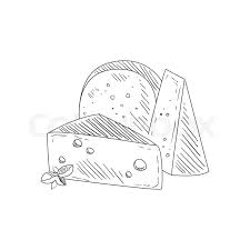 set of three diffe cheeses hand drawn realistic detailed sketch in cly simple pencil style on white background stock vector colourbox