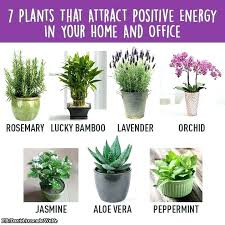 small plants for office. Small Indoor Plants Best Desk Fancy Idea Office Suitable For An That Dont Need Sunlight