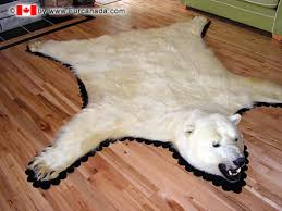 no polar bear trophy imports to u s says federal court care2 causes