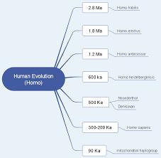 Human Evolution Timeline Chart Human Evolution Mind Map Free Human Evolution Mind Map