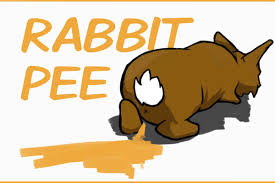 rabbit urine what tells you about