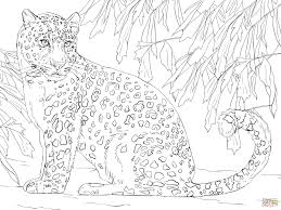Small Picture Amur Leopard coloring page Free Printable Coloring Pages