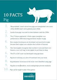 pig understanding animal research