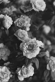 black and white flowers tumblr photography. Perfect And To Black And White Flowers Tumblr Photography E
