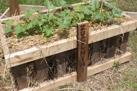 straw bale gardening archives old