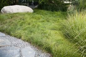 Carex remota