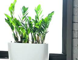 Tall Office Plants No Light Low Light Plants For Office Large Indoor Plant Low Light Best Indoor Office Plants Doragoram Office Plants No Light Best Indoor Plants Low Light Best Indoor