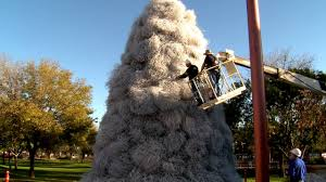 Downtown Chandler Christmas Tree Lighting A Chandler Tradition The Tumbleweed Tree