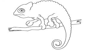 Iguana Coloring Page – Pilular – Coloring Pages Center