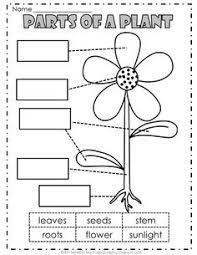 Small Picture Free Parts of a Leaf Printables worksheets coloring pages