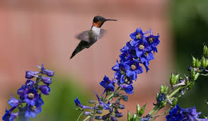 hummingbirds and flowers wallpaper. Hummingbirds And Flowers Wallpaper Intended