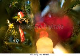 Candy Cane Christmas Lights Stock Photos U0026 Candy Cane Christmas Christmas Tree With Candy Canes