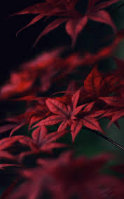 Weeds Wallpaper HD - Best Cool Weeds ...