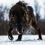 Anais Wolf Facebook, Twitter & MySpace on PeekYou