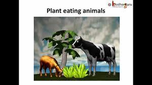 Science Animals Food Telugu Youtube