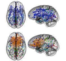 brain wiring diagram wiring diagrams most prehensive wiring diagram of the mam an brain to date