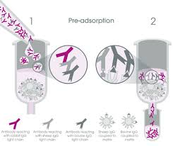 Pre Adsorbed Secondary Antibodies Abcam