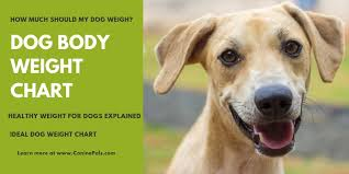 Dog Body Weight Chart Canine Pals