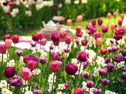 when to plant jonquil bulbs 3 season bulb garden how to plant spring bulbs how to plant daffodils daffodil planting tips planting narcissus bulbs in pots