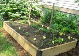 beautiful design vegetable garden box designs raised bed vegetable