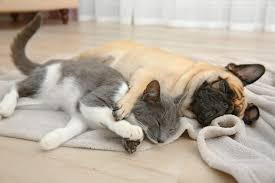 kittens and puppies sleeping. Exellent Puppies Kitten And Puppy Sleeping In Kittens And Puppies Sleeping E