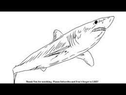 mako shark drawing. Contemporary Mako How To Draw A Shark  YZArts Intended Mako Drawing