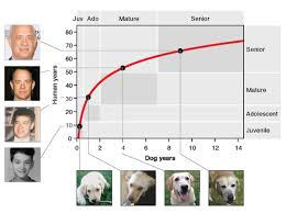 A Chart Of Dogs Heres How Fast Your Dog Really Ages And No Its Not The