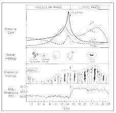 Estrogen Levels Chart What Are Normal Estrogen Levels Testing Symptoms More