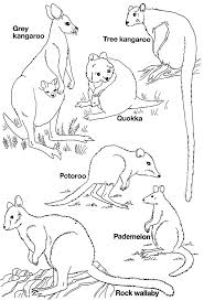 Small Picture Australian Animal Template Animal Templates Free Premium