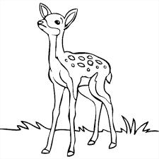 Deer Head Drawing Easy Free Download Best Deer Head