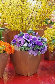 Paper Flower Pots Bouquets Of Beautiful Anemone Ranunculus And Mimosa Flowers