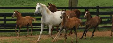 horse insurance quotes compare the market raipurnews