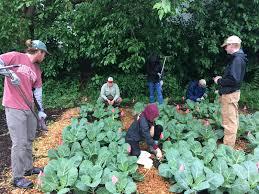 community gardens soil science