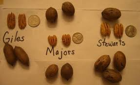 Pecan Size Chart Types Of Pecans