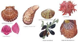 Двустворчатые моллюски характеристика и строение Зоология  Строение