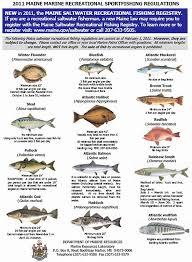 Florida Saltwater Fishing Regulations Chart Saltwater Fish Regulations 2013 Nj Saltwater Fishing