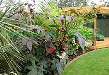 Small Picture Garden Designs exotic plants tropical plants Mediterranean plants