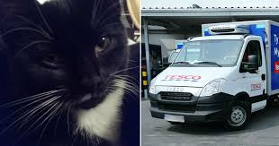 heartbroken mum says tesco delivery driver ran over her cat then supermarket offered to pay for a substitute mirror