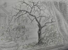 window pencil drawing. bare tree through a window pencil drawing