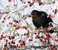 Znalezione obrazy dla zapytania dokarmiamy ptaki cliparty darmowe