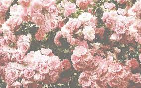 Desktop Wallpaper Flowers Aesthetic ...