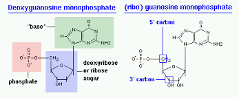 Structural Biochemistry Nucleic Acid Wikibooks Open Books For An