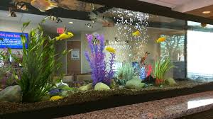 office fish tanks. Interesting Mix Of Fish At Local Dentist Office Tanks Y