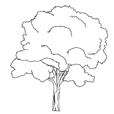 Small Picture Stunning Tree Coloring Pages Contemporary New Printable Coloring