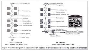Types Of Microscopes Chart Working Principle Of A Electron Microscopes With Diagram