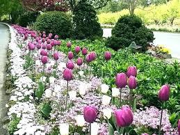 bulb garden designs spring bulbs spring flowers early